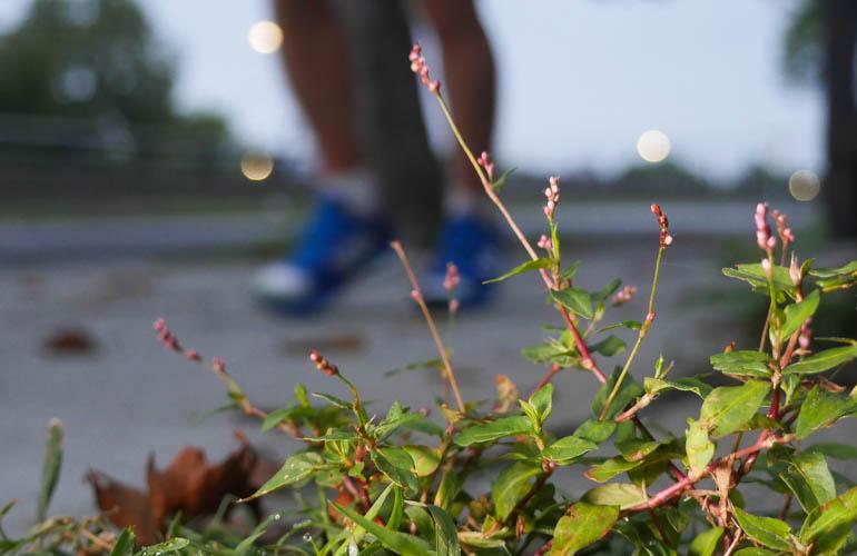 flower-1390612