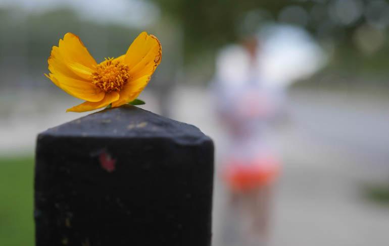 flower-1390987