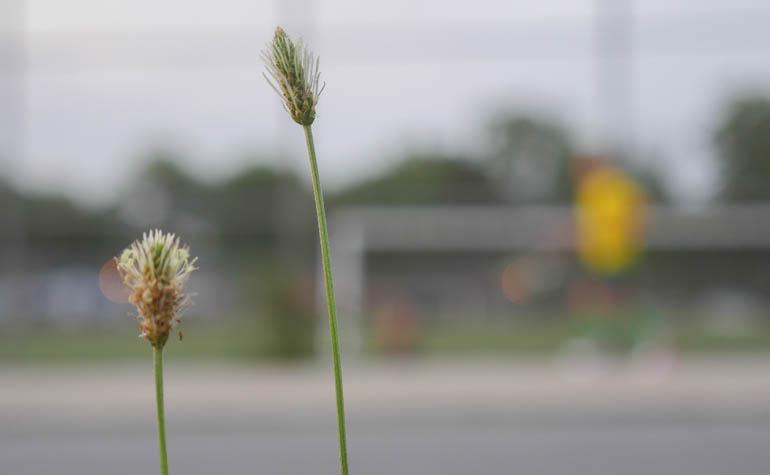 flower-1410310