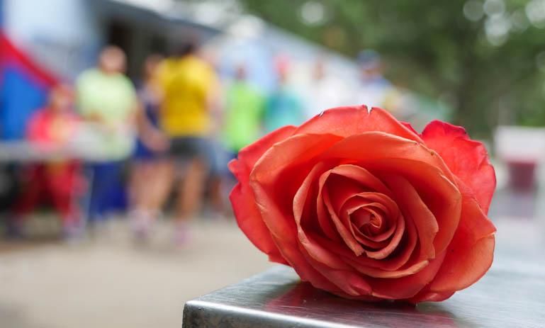 flower-1410539
