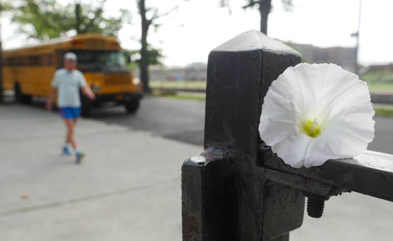 flower ananda-lahari-1410552