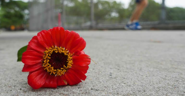 flower ashprihanal-1390844