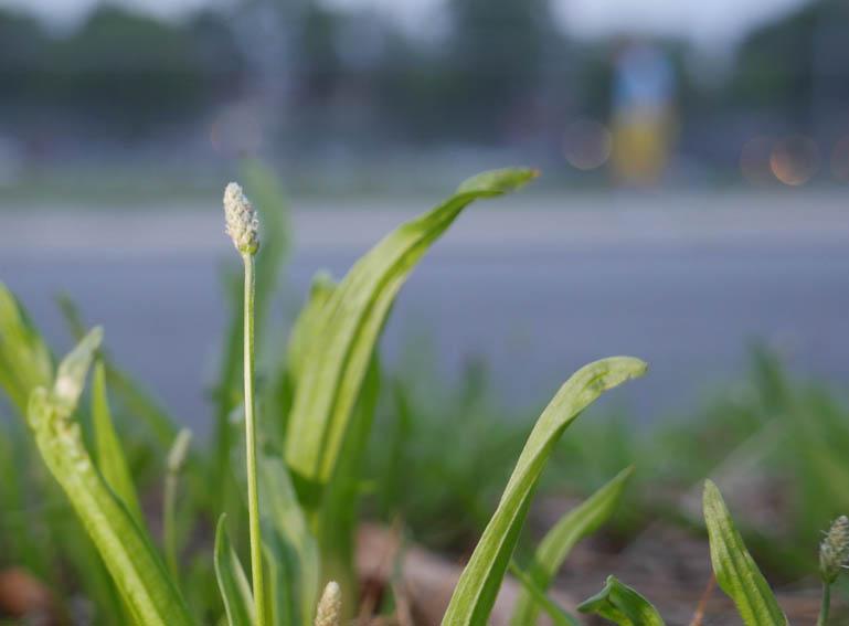 flower ashprihanal-1390977