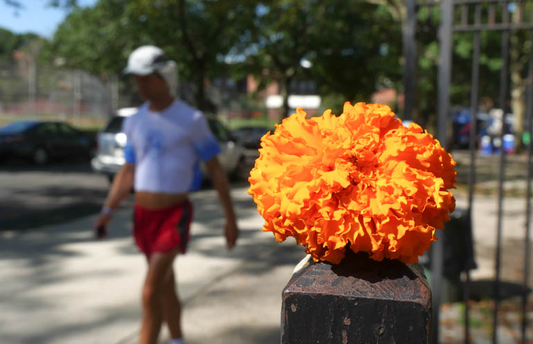 flower atmavir-1400568
