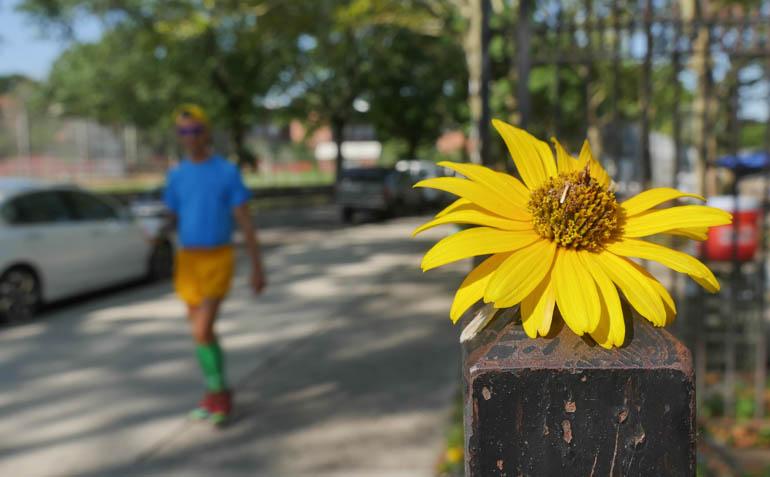 flower atmavir-1410115
