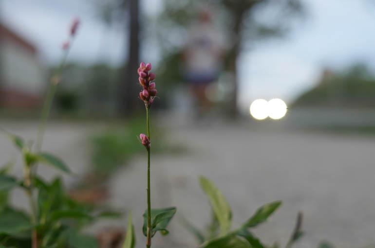 flower final-1390997
