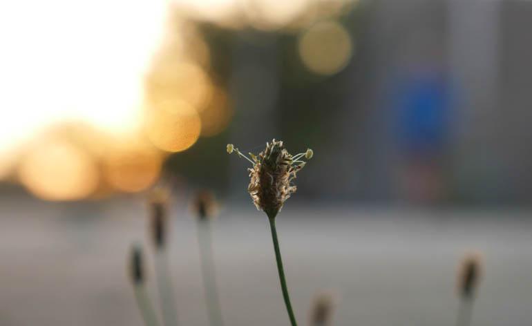 flower final-1400980