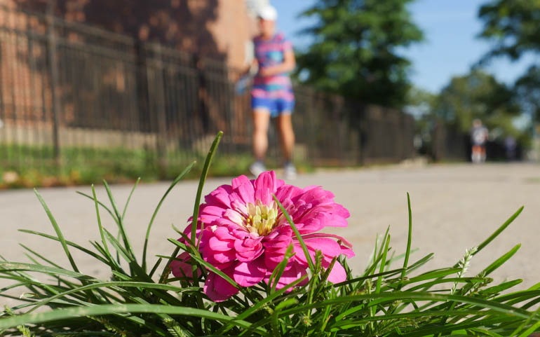 flower kaneenika-1400792