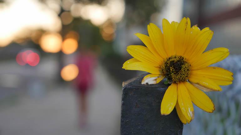 flower kaneenika-1410605