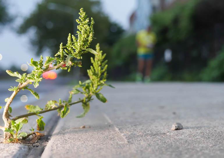 flower sopan-1390611