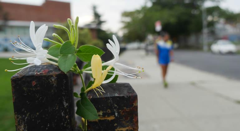 flower sopan-1410415