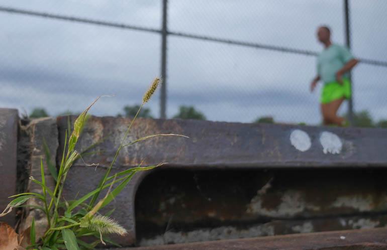 flower stutisheel-1390982