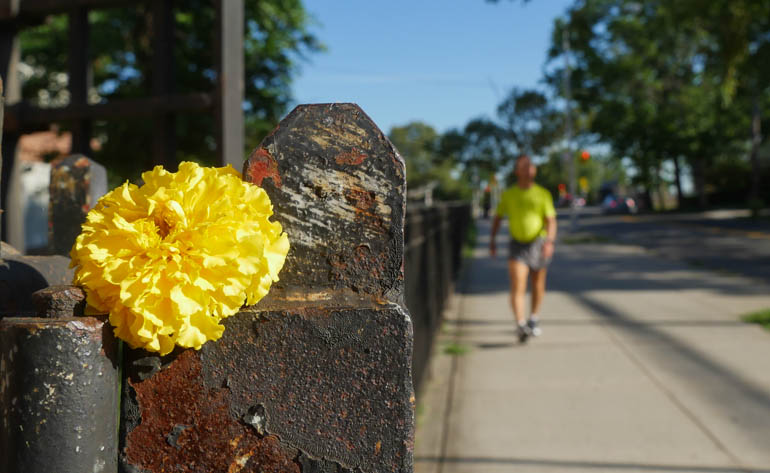 flower stutisheel-1400795