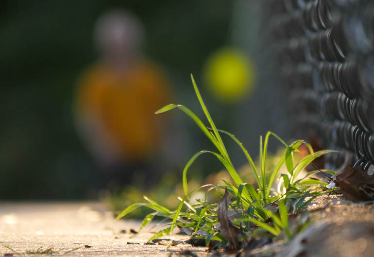flower stutisheel-1410661