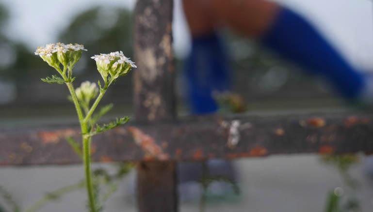 flower surasa-1390624
