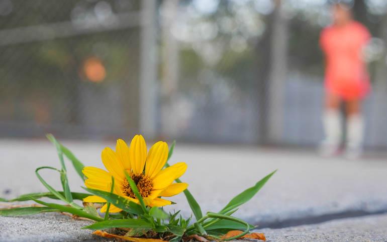 flower surasa-1410844