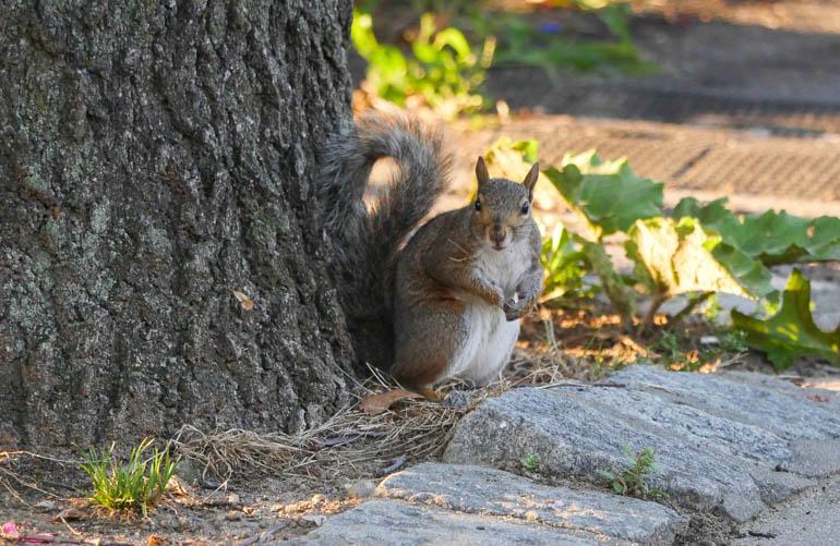 squirrel-1400435